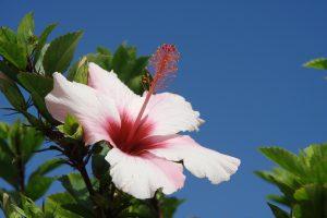 Blumen Madeira
